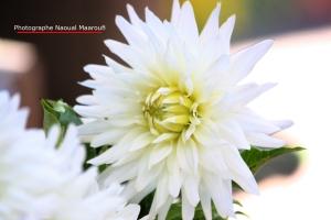 flores-convivencia-011